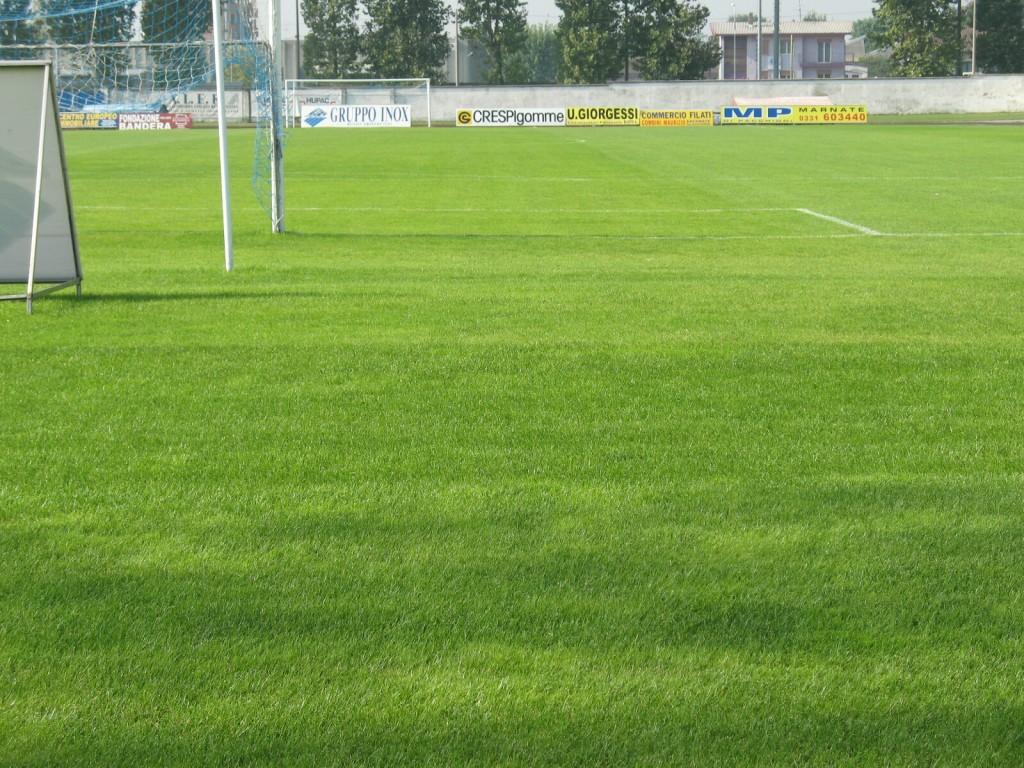 Campo da calcio in erba naturale